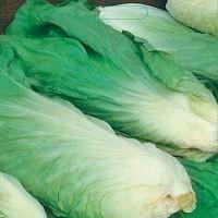 Groenlof - Groentezaden Bladgroente Zaden kopen? Tuinzaden.eu