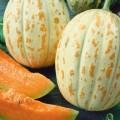 Meloen & Watermeloen