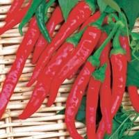 Pepper - Vegetable seeds Fruit crop Seeds • Tuinzaden.eu