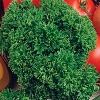 Peterselie - Kruidenzaden kopen? Tuinzaden.eu