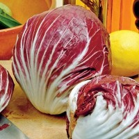 Red Chicory - Vegetable seeds Leafy vegetables Seeds • Tuinzaden.eu