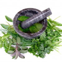 Spices & herb seeds • Tuinzaden.eu