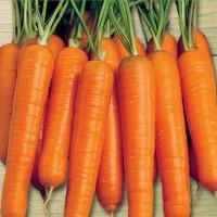 Carrots -   Fruit & Vegetable Seeds