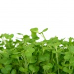 Sprouts & Microgreens