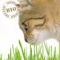 Huisdieren gras zaden