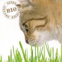 Huisdieren gras zaden - Overige Zaden Overige kopen? Tuinzaden.eu
