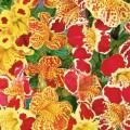 Monkey Flower (Mimulus)