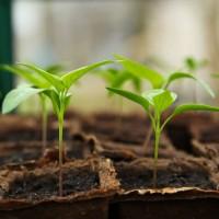 Seeds • Tuinzaden.eu