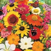 Butterflies Flowers -   Flower Seeds