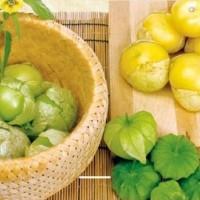 Tomatillo - Groentezaden Vruchtgroente Zaden kopen? Tuinzaden.eu