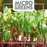 Microgreens - Sprouts  Microgreens Vegetable seeds • Tuinzaden.eu