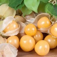 Ananaskers - Groentezaden Vruchtgroente Zaden kopen? Tuinzaden.eu