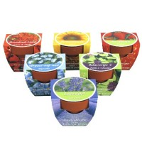 Mini Growing Gifts - Green Gifts