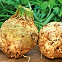 Celeriac -   Fruit & Vegetable Seeds