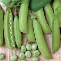 Garden Peas - Vegetable seeds Beans and Peas Seeds • Tuinzaden.eu
