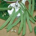 Dwarf String Beans