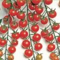 Cherry / Kerstomaten Zaden