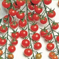 Cherry Tomatoes - Tomato -   Fruit & Vegetable Seeds