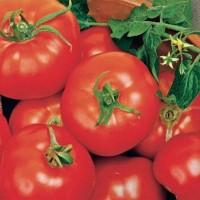 Ronde Tomaten Zaden - Groentezaden Zaden kopen? Tuinzaden.eu