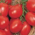 Pomodori Tomaten Zaden