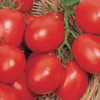 Pomodori Tomaten Zaden - Tomato -   Fruit & Vegetable Seeds