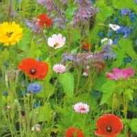 Bloemenweide mengsels - Overige Zaden Overige kopen? Tuinzaden.eu