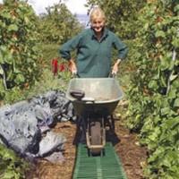 Tuinhulpjes - Tuin benodigdheden Kweekproducten kopen? Tuinzaden.eu