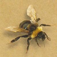 Bees Flower Mixture - Flowermixtures Large - Other Seeds