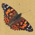 Vlinder Bloemen Mengsel