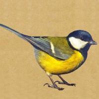 Birds Flower Mixture - Flowermixtures Large - Other Seeds