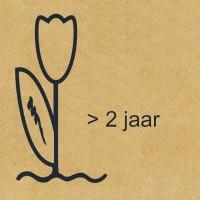 Meerjarig Bloemen Mengsel - Overige Zaden Overige kopen? Tuinzaden.eu