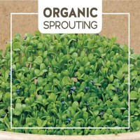 Organic Sprouting - Vegetable seeds • Tuinzaden.eu