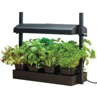 Met verlichting - Binnen Kweken Kweekproducten kopen? Tuinzaden.eu