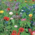 Mixtures of flowerseeds