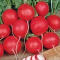 Knol- en wortelgroente