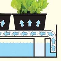 Propagator self watering - Growing indoors Sow  Grow • Tuinzaden.eu