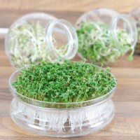 Sprouting grow kits - Propagator Sow  Grow • Tuinzaden.eu