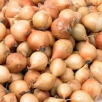 Onion sets - Shallots onions sets  garlic Other • Tuinzaden.eu