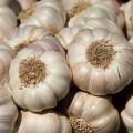 Garlic sets