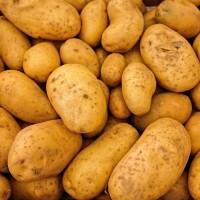 Seed potatoes - Shallots onions sets  garlic Other • Tuinzaden.eu