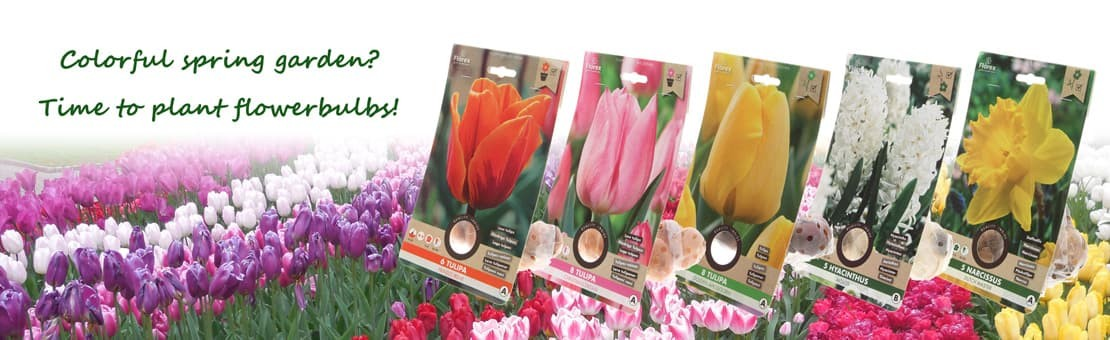 time to plant flowerbulbs tulips narcissus hyacinths