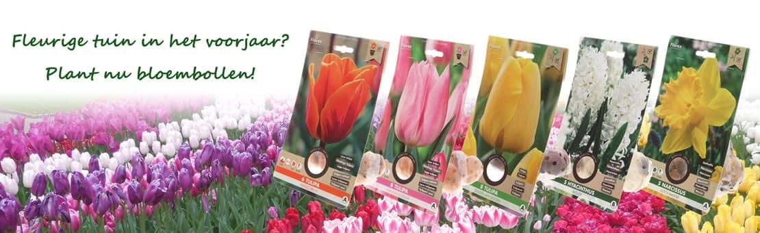 plant nu bloembollen tulpen narcis hyacint