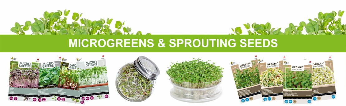 microgreens and sprouting seeds